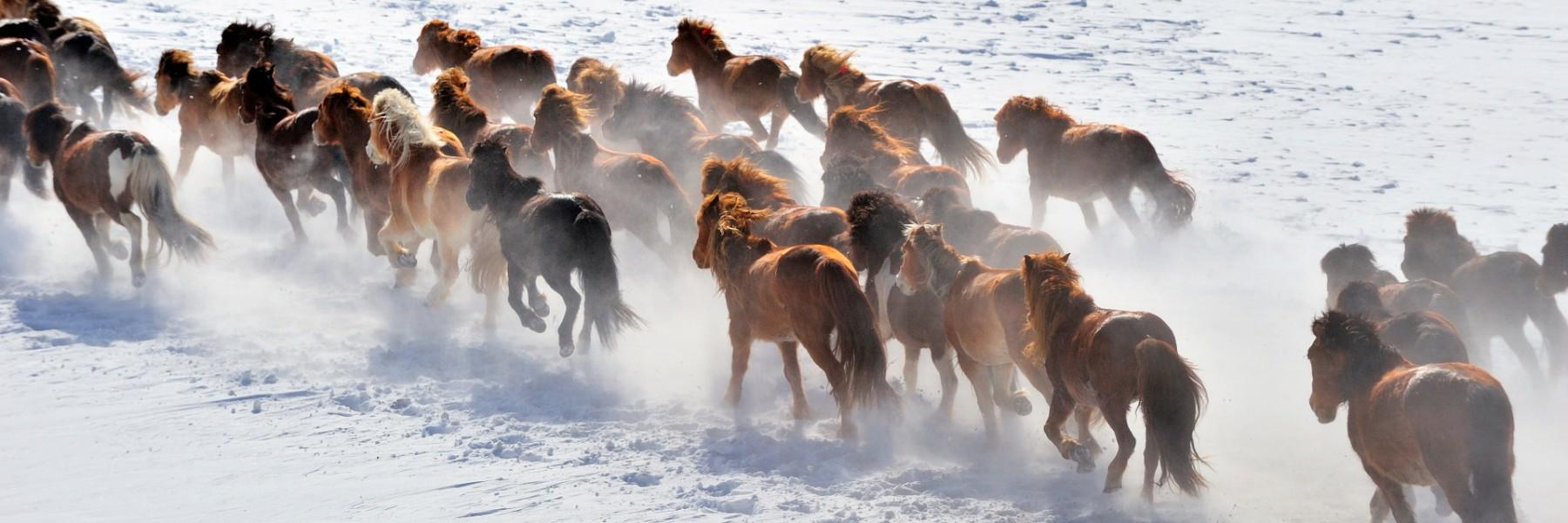 wild-horses-running-picture-id682125704